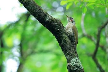 6月の野鳥