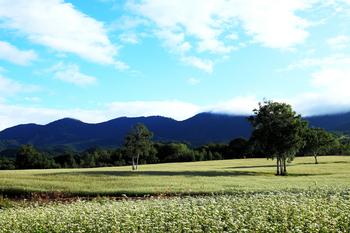 高杖ソバ畑