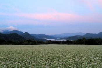 高杖高原のそば畑1
