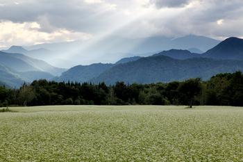 高杖高原のそば畑3