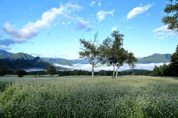 高杖高原のソバ畑